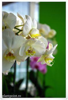Florăria Plant Point din Iaşi.