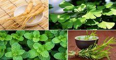 4 kruiden die je hersenen kunnen beschermen tegen alzheimer, depressie, angst en nog veel meer!