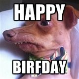 Tuna the Phteven dog Happy Birthday - Happy Birthday Funny - Funny Birthday meme - - Tuna the Phteven dog Happy Birthday The post Tuna the Phteven dog Happy Birthday appeared first on Gag Dad. Birthday Meme Dog, Funny Happy Birthday Meme, Happy Birthday Quotes, Happy Birthday Images, Happy Birthday Cards, Funny Happy Birthdays, Birthday Funnies, Card Birthday, Birthday Greetings