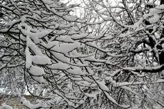 Branches with snow