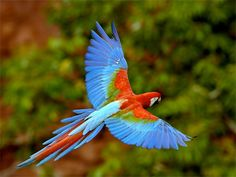 Brazil's Pantanal region hide an incredible array of creatures – a macaw