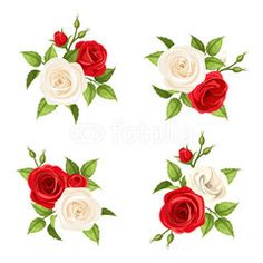 Bouquets of red and white roses. Vector set of four illustrations.