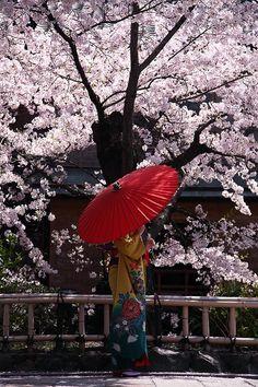 Under the cherry tree.