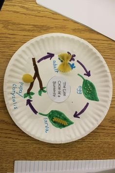 The Life Cycle of Butterfly with noodles and a paper plate.