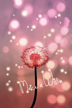 dandelion wish quote words text lights fireflies pink dandy flower dream love cute pastel yellow new Text art