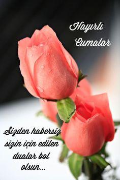 Beautiful Morning Messages, Jumma Mubarak Quotes, Good Morning, Islam, Vegetables, Rose, Flowers, Plants, Amigurumi