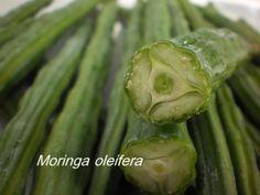 Moringa fruit