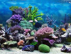 Coral Reef Photos on Pinterest | Coral Reefs, Coral and Nature