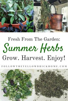One of my greatest joys is being able to grow, harvest, and enjoy herbs straight from the. Growing Herbs, Growing Vegetables, Rosemary Growing, Best Garden Tools, Autumn Clematis, Hydroponic Gardening, Herb Gardening, Mental Health And Wellbeing, Natural Herbs