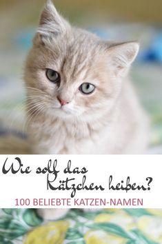 100 beliebte Katzennamen - Wie soll die Katze heißen! Ich brauche hier auf der Pflegestelle oft Namen für die neu angekommene Babykatzen, deshalb habe ich hier eine Liste mit über 100 Namen für Katzen zusammengestellt.