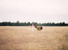 Alpaca Farm wedding inspiration