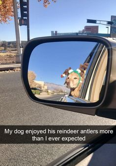 Funny Snapchats Dog Photo – 190 Pics Funny Animal Pictures, Cute Funny Animals, Funny Cute, Dog Pictures, Funny Dogs, Hilarious Sayings, Funny Kitties, Funny Horses, Hilarious Pictures