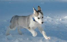 My dream puppy.