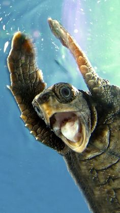 Funny Turtle   ♥g♥