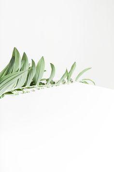 Via Anna Lawska | Green Leaf Art | Minimal | Botany