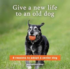 The joy of an older dog