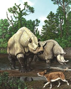 Prehistoric mammal populations correlated with long-term climate change.
