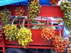 panama-pixbae-palm-tree-fruit | Flickr - Photo Sharing!
