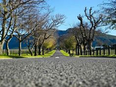 Entrance to a wine farm: Entrance, Sidewalk, Wine, Inspiration, Travel Agency, Paths, Countries, Traveling, Biblical Inspiration