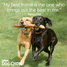 My animals/family/ friends bring out the best in me!