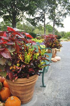 Gorgeous fall plants featured on www.fiskars.com