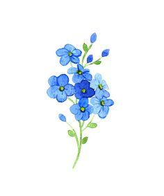 Flowers forget-me vector art illustration