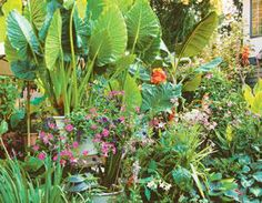 Tropical Garden Paradise   BCLiving