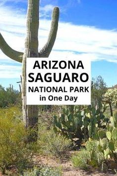 Visit Saguaro National Park in One Day? Find out why Saguaro is the perfect day trip from Tucson Arizona for outdoor fun! Arizona Day Trips, Arizona Travel, Us National Parks, Desert National Park, Michigan Travel, All Nature, Best Hikes, Travel Usa, Canada Travel