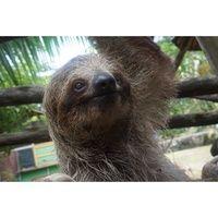 13enya cody_majestic looking sloth.jpg