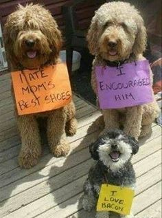 Jake is the one with the orange sign, Bailey has the purple one and Candy get's the yellow one :P
