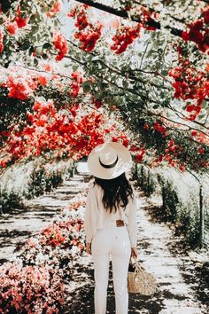 Glorious Enjoy Life With Your Own Flower Garden Beautiful Easy Ideas. Enjoy Life With Your Own Flower Garden Beautiful Easy Ideas. No Rain, Foto Pose, Beautiful Flowers, Red Flowers, Red Roses, Flora Flowers, Beautiful Places, Planting Flowers, Aqua
