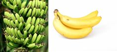 5 Problems Which Bananas Solve Better Than Medicines! - Fit By Dance