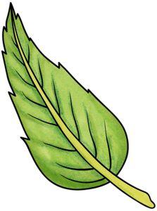 ladylony — «leaf1.png» на Яндекс.Фотках