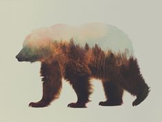 Beautiful Double Exposures Merge Animals With The Landscapes They Inhabit
