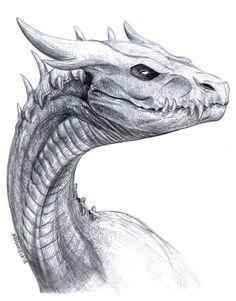 Art Drawings Sketches, Animal Drawings, Cool Drawings, Magical Creatures, Fantasy Creatures, Dragon Tatto, Dragon Sketch, Dragon Artwork, Dragon Design