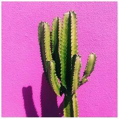 Cactus love  #inspocali #caliwoo
