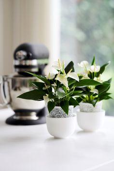 Inspiratie: zo style je de keuken met anthurium planten Green Kitchen, Home Decor Inspiration, Houseplants, Cool Kitchens, Bloom, Beautiful, Indoor House Plants, Potted Plants