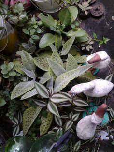 Sara said plantas e cactos