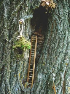 Hill of Tara Fairy Tree | Fairy Tree | Flickr - Photo Sharing!  Chapter: stairs, steps, ladders, paths, gates, arbours,