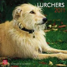 lurcher, Lurchers, part greyhound part some other breed Dog Charities, Lurcher, Kinds Of Dogs, Wolfhound, Whippets, Aussies, Greyhounds, Spaniels, Dog Pictures