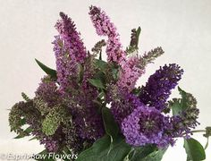 Butterfly Bush (summer lilac) purple lavender Lavender Flowers, Cut Flowers, Lilac, Purple, Blue, Butterfly Bush, Exterior, Gardening, Seasons