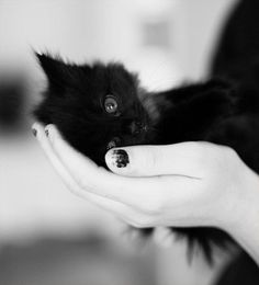 Apparently black cats are the least popular cats to get rehoused at cat shelters. This makes me dead sad  :( when people say its bad luck if a black cat crosses your path I disagree because to me there is only good luck and black cats are good <3 ♥me, too♥