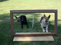Awesome portrait idea!! Peg Boards, Portrait, Awesome, Dogs, Animals, Animales, Headshot Photography, Animaux, Pet Dogs