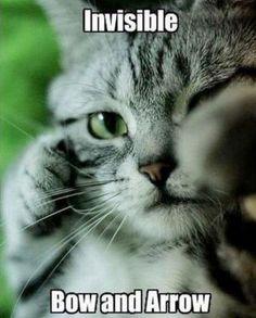 cute cats meme - Google Search