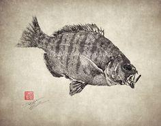Barred SURF PERCH - GYOTAKU print - traditional Japanese fish art - by dowaito