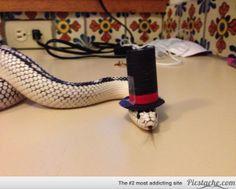 13 Horrifying Snakes Wearing Adorable Little Hats