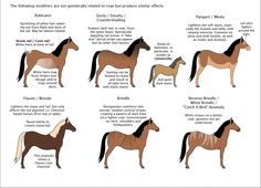 Other colour modifiers of horses. Some of them can lead to confusion with roan horses. Detail of the poster Guide to horse colors and patterns by majnouna.