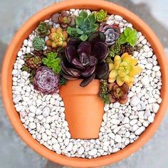 Decoration trend: Small colorful DIY succulent flower pot in a top .- Deko-Trend: Kleiner bunter DIY-Sukkulenten-Blumentopf im Topf Decoration trend: Small colorful DIY succulent flower pot in a pot pot colorful - Succulent Arrangements, Cacti And Succulents, Planting Succulents, Planting Flowers, Succulents In Containers, Cactus Plants, Succulent Gardening, Succulent Terrarium, Succulent Ideas