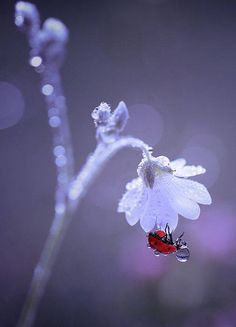 Ladybug bath