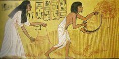 b_1024_768_0_10_images_stories_vita-quotidiana_tomba-di-Sennedjen-deir-el-medina-aratura.jpg (800×398)